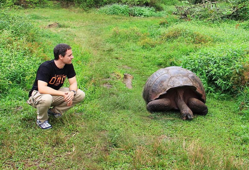 Huge tortoises on Galapagos Island. ©Afer2073