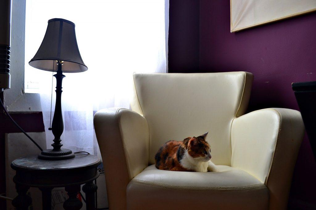 monet cat new york solitarywanderer