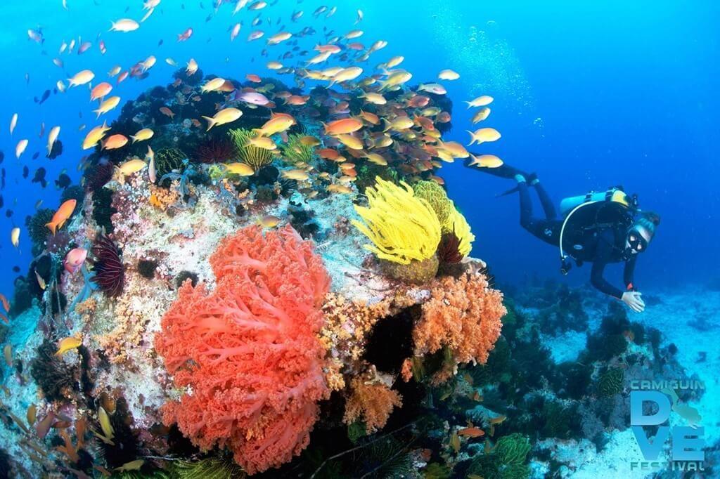 corals camiguin dive site black forest